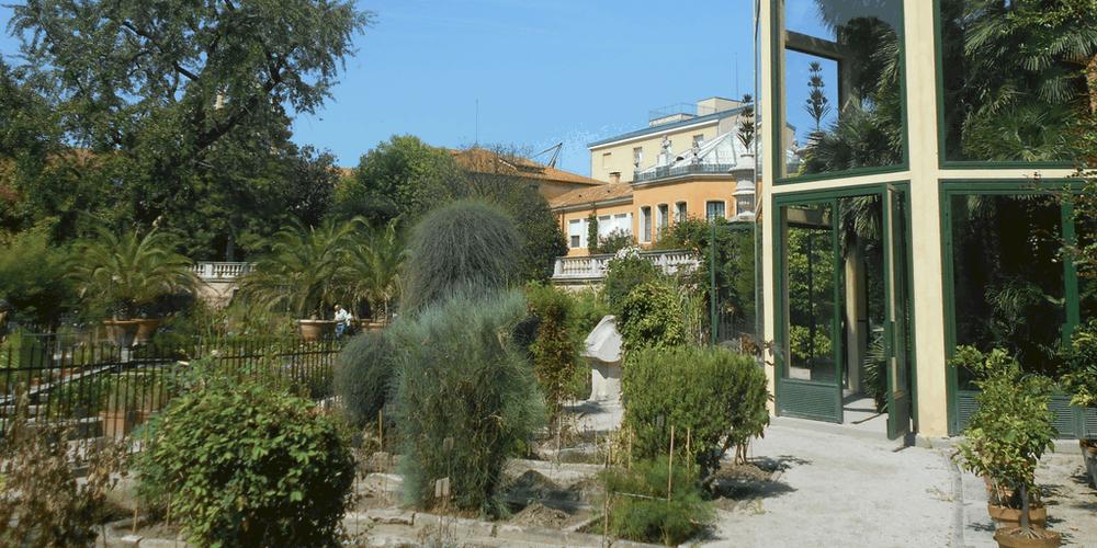 La Palma di Goethe e il giardino antico