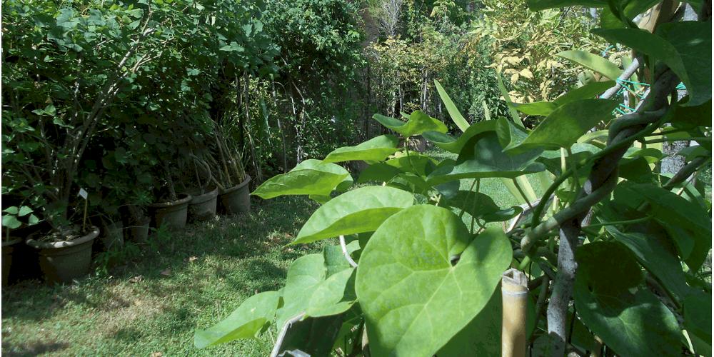 orto botanico ed erbario di bologna piante