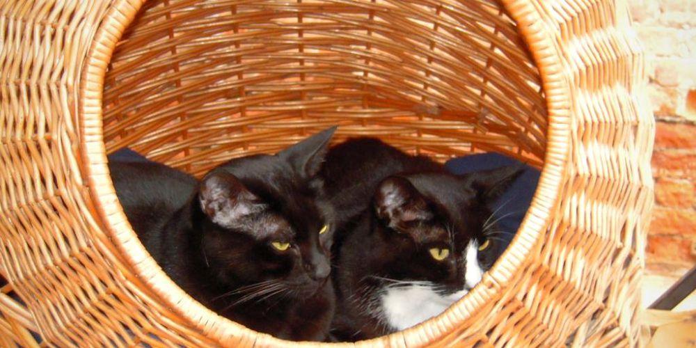 i gatti della libreria acqua alta a venezia